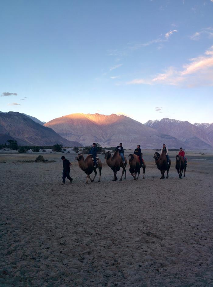 Camel Rides !!